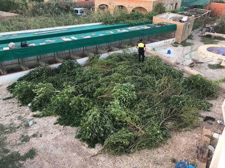 Un detenido por cultivo de marihuana en La Puebla de Cazalla