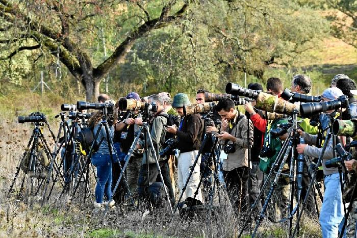 Más de 300 fotógrafos se dan cita en el Photo Nature Andalucía en La Puebla del Río