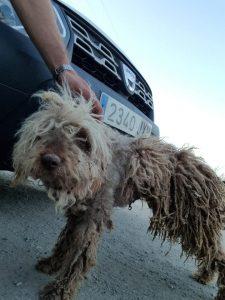 En la imagen, Selene, una perra rescatada en muy mal estado.