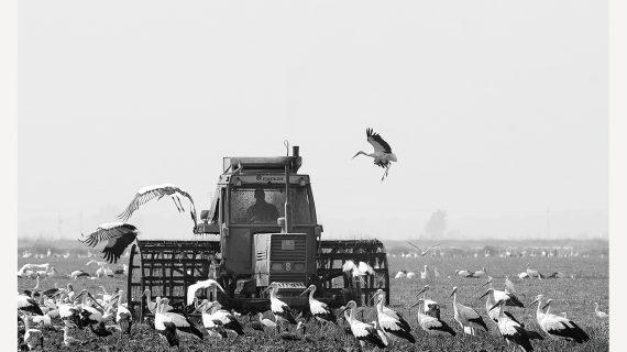 La Casa de la Provincia acoge una muestra sobre la cosecha de arroz en el Guadalquivir
