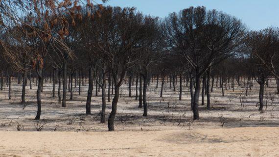 La rehabilitación del entorno tras un incendio forestal puede permitir la recuperación de los valores naturales