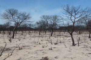Zona incendiada del Parque Natural de Doñana, en Junio de 2017.
