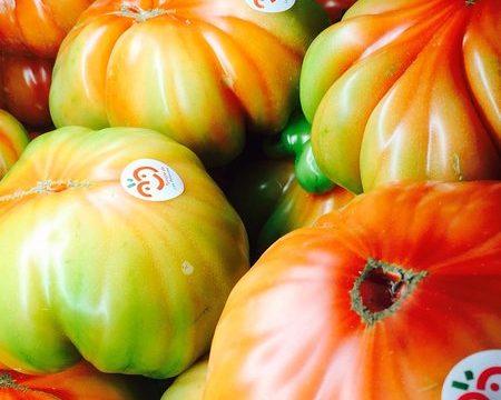 Nuevo récord de producción del Tomate de los Los Palacios
