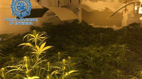 Desmantelan en Utrera una plantación de marihuana en el interior de una vivienda