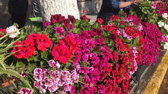 El 'granaíto', el original cuponero de Arahal que ha conseguido que se respeten las flores