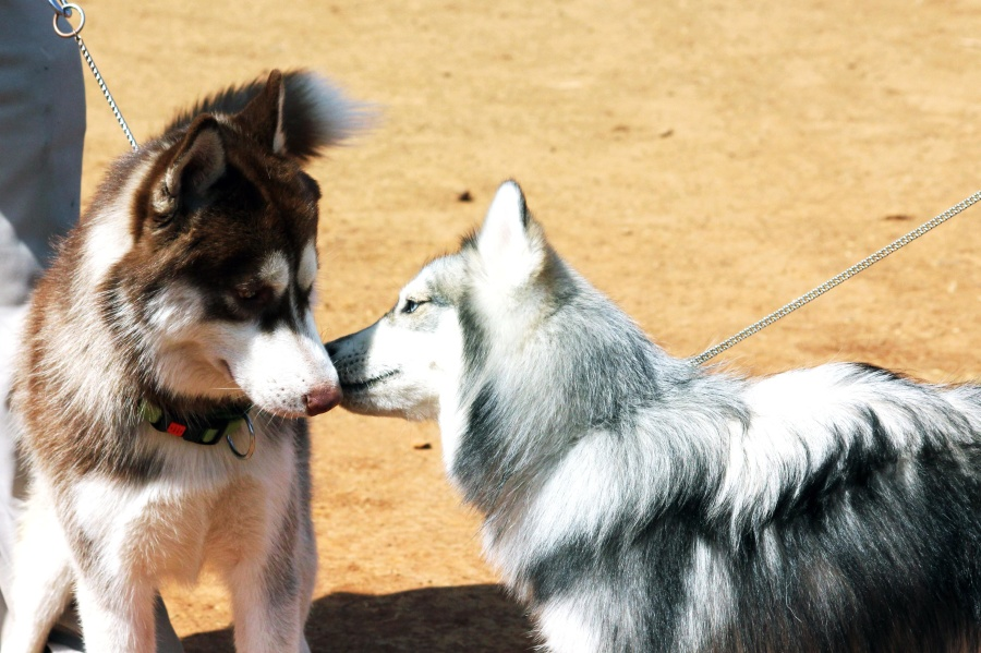 El maltrato animal se multará hasta con 30.000 euros en Sevilla