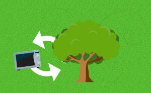 Con la iniciativa 1 kilo = 1 árbol, Ecolec lleva a cabo la reforestación de Espacios Naturales Protegidos.