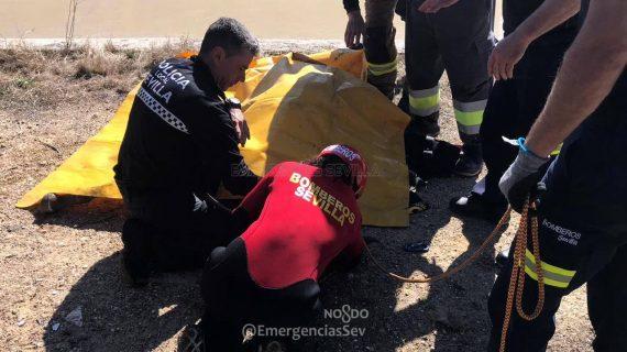 Logran rescatar un potro caído en Torreblanca