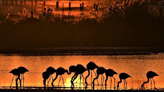 La Puebla del Río recoge en una exposición fotográfica la belleza de Doñana