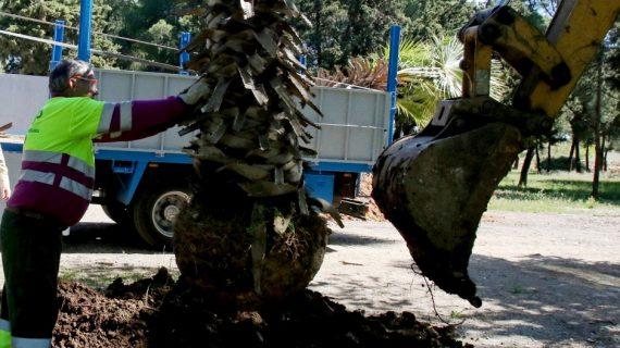El Parque Torreblanca lucirá 22 plantas de palmeras