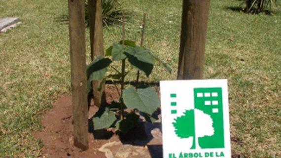 La US planta un ejemplar de Paulownia híbrida en el Rectorado como gesto de su compromiso con el medio ambiente