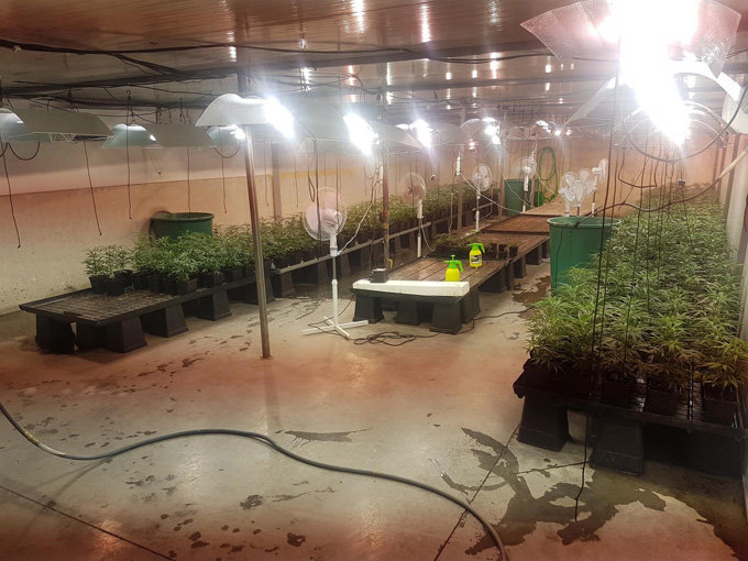 Desarticulan una organización dedicada al cultivo intensivo de marihuana en Aznalcóllar