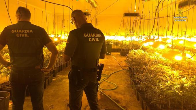 Cuatro detenidos por cultivar marihuana en invernaderos de alto rendimiento en Salteras y Espartinas