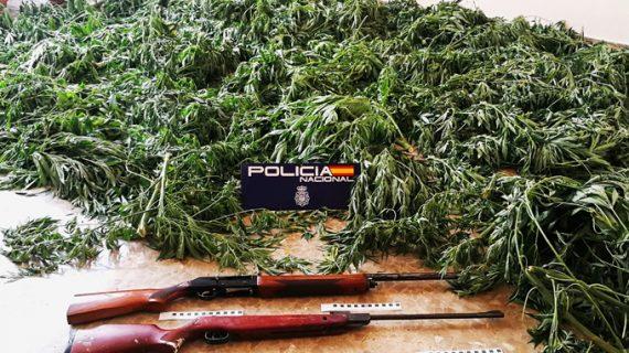 Localizan una plantación de marihuana en una finca en Morón de la Frontera