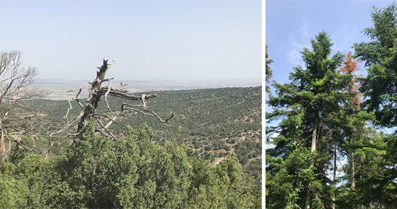 Científicos descubren un nuevo método de alerta temprana del decaimiento forestal