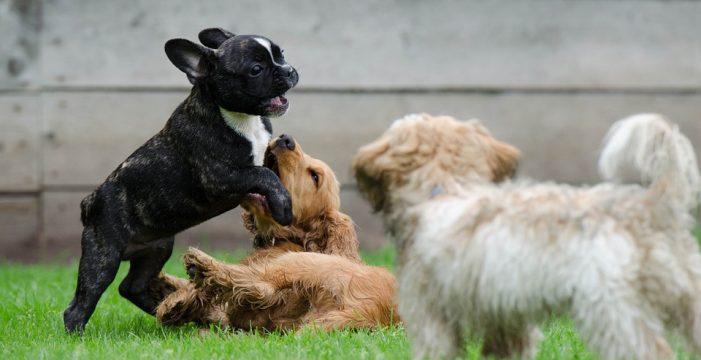 Utrera crea un registro municipal de animales de compañía
