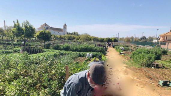 Utrera creará 45 nuevos huertos urbanos en el Parque de V Centenario