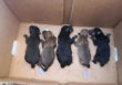 La Policía de Alcalá consigue salvar a cinco cachorros de perros abandonados en un contenedor