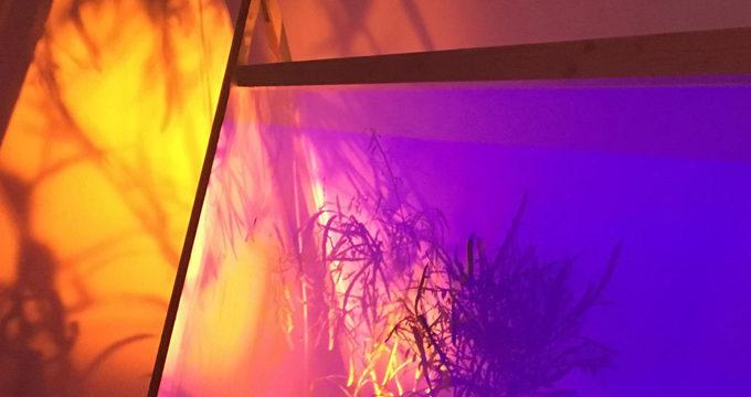 Abre sus puertas la exposición 'Jardín Cosmopolita' en CaixaForum Sevilla