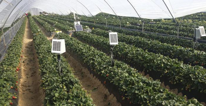 Emprendedores andaluces hacen de la agricultura un sector más eficiente a través de la tecnología