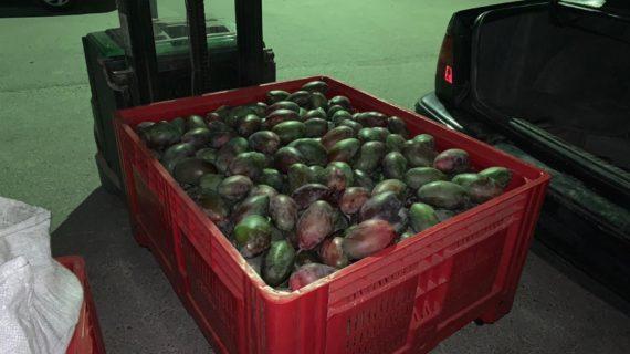 Detenidos dos hombres en Arahal acusados de robar 676 kilos de mango tras haber pinchado una rueda