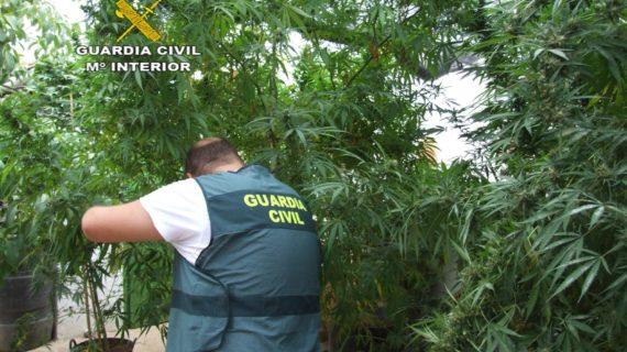 Dos detenidos tras hallar un cultivo de marihuana en Herrera