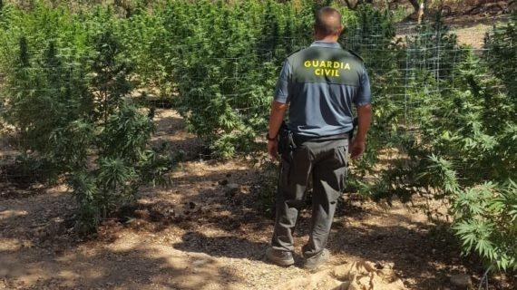 Desmantelan una plantación de marihuana y rescatan a tres perros en mal estado en El Castillo de Las Guardas