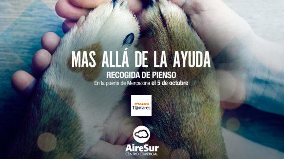 La asociación MascoTomares, un apoyo para las mascotas tomareñas