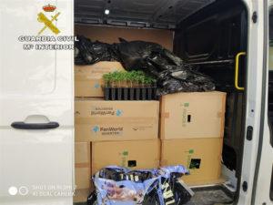 El detenido conducía una furgoneta con cerca de 3.000 plantas de marihuana.