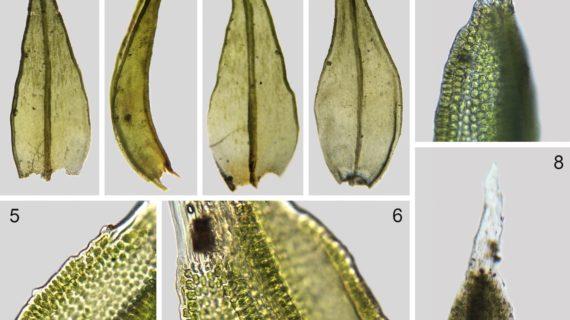Dos nuevas especies botánicas salen a la luz en Andalucía