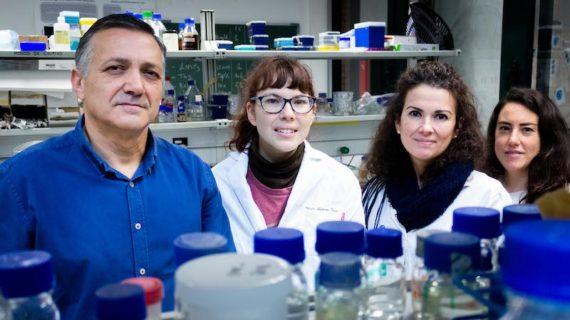 Investigadores de la Olavide trabajan en una terapia para una enfermedad rara mitocondrial