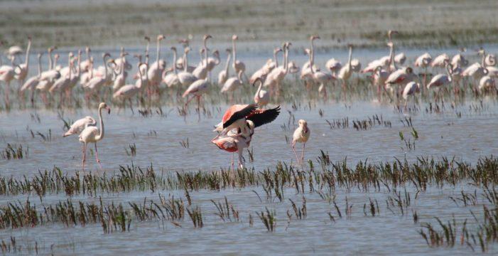 El paraíso de las aves en La Puebla Del Río