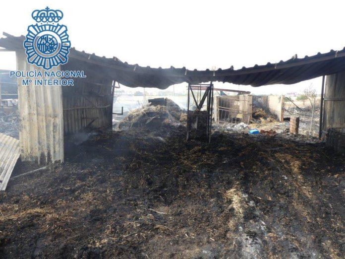 La Policía Nacional evita la muerte de al menos 15 caballos a consecuencia de un incendio en las caballerizas de los Jardines de Guadaíra