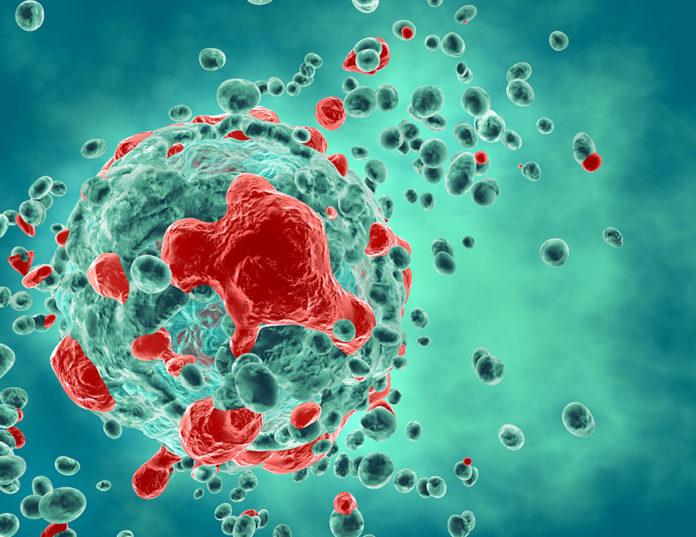 Obtienen anticuerpos capaces de reconocer específicamente células tumorales humanas.
