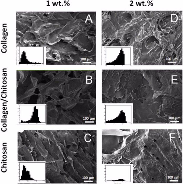Investigadores de la US desarrollan andamios de colágeno y quitosano para reconstruir tejidos dañados.