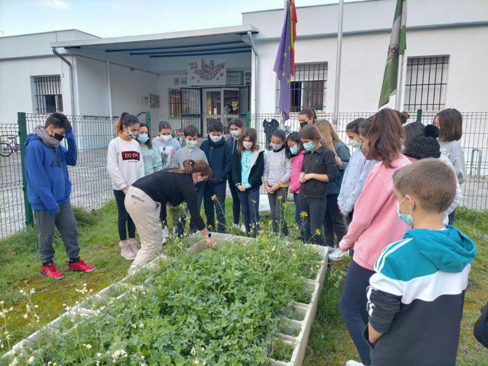 El colegio Cruz del Campo de Sevilla vence al coronavirus y logra otro Erasmus Plus