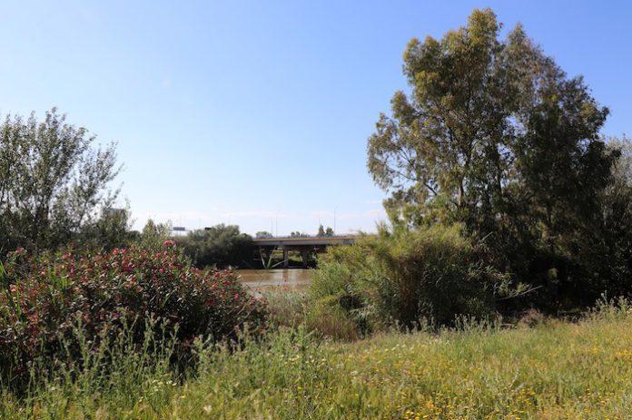 El Real Betis convoca a la ciudadanía para limpiar la ribera del río Guadalquivir