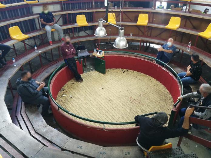 Desalojad una pelea de gallos con 150 personas concentradas en Utrera