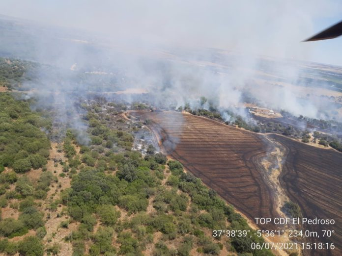 Extinguido el incendio forestal declarado en Lora del Río